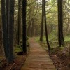Trend Alert: The Health Benefits of Forest Bathing