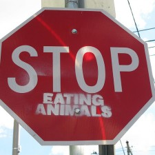 Stop Eating Animals by sensesmaybenumbed