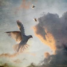 Peace Dove by Alice Popkorn